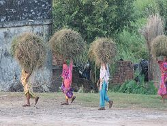 Locals carrying hay
